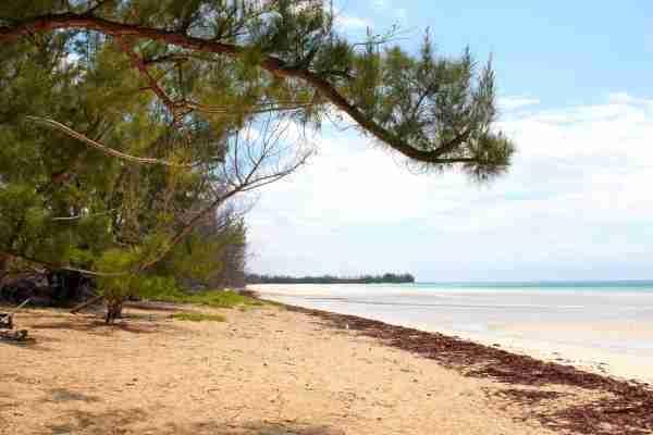 Gold Rock Beach, Grand Bahama.  (Photo by Phil Friar / Shutterstock)
