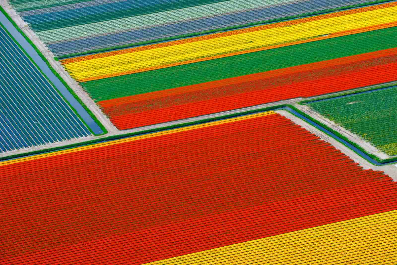Lisse in the Netherlands and the Tulip farms. (Photo by Hollandluchtfoto/Getty Images)