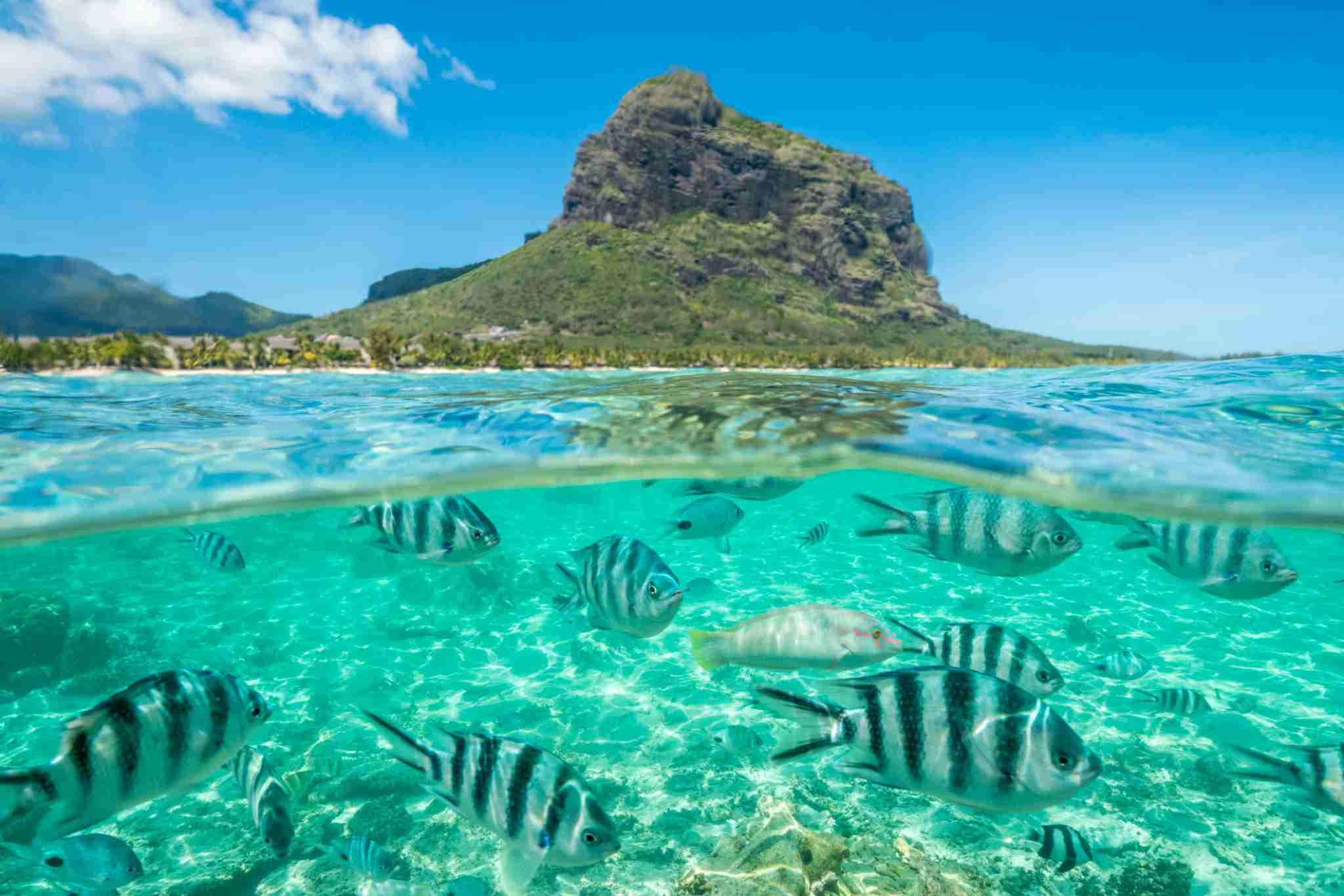 Striped tropical fish swimming under waves along coral reef, Le Morne Brabant, Black River district, Indian Ocean, Mauritius (Photo by Roberto Moiola/Getty Images)