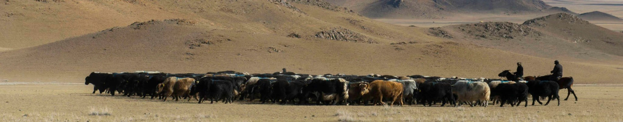 Dreaming of Mongolia: How I'll book my trip after the pandemic