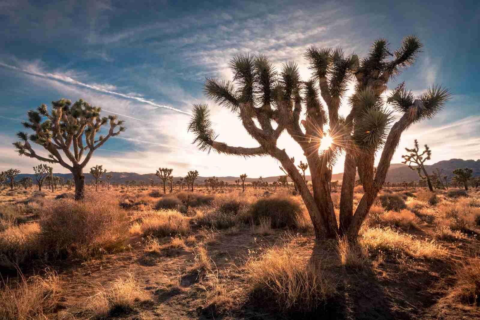 Joshua Tree National Park. (Photo by frank1crayon/Adobe Stock)