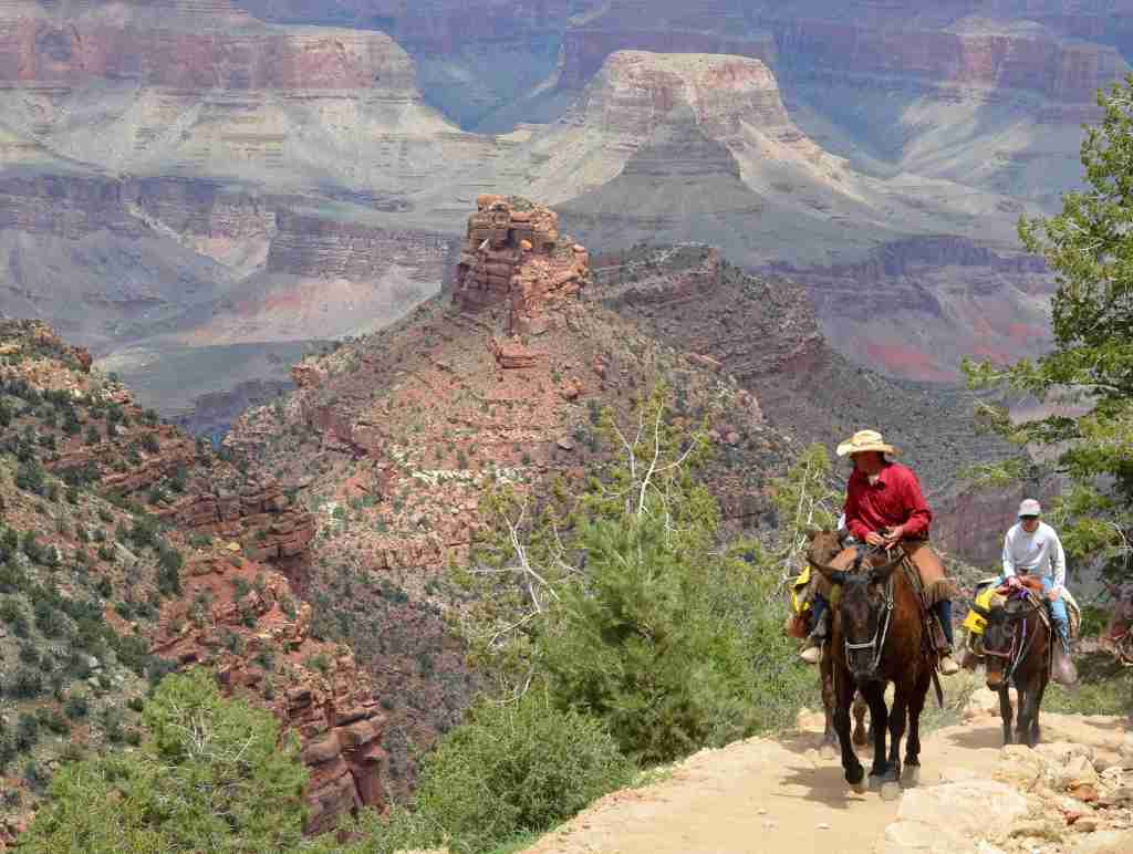 Guide leading mule riders up a steep portion of the Bright Angel Trail known as Heartbreak Hill. (Photo by Michael Quinn/National Park Services)