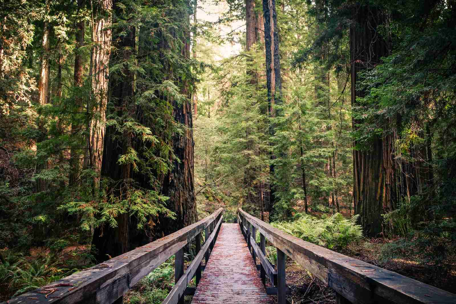 Montgomery Woods State Natural Reserve in Mendocino county. (Photo by GaryKavanagh/Getty Images)