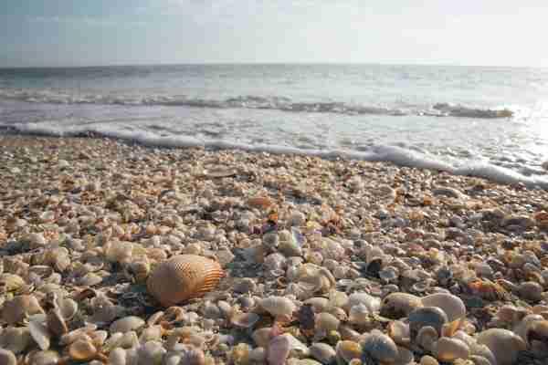 Sanibel seashells Florida