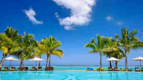Palm Trees over a pool