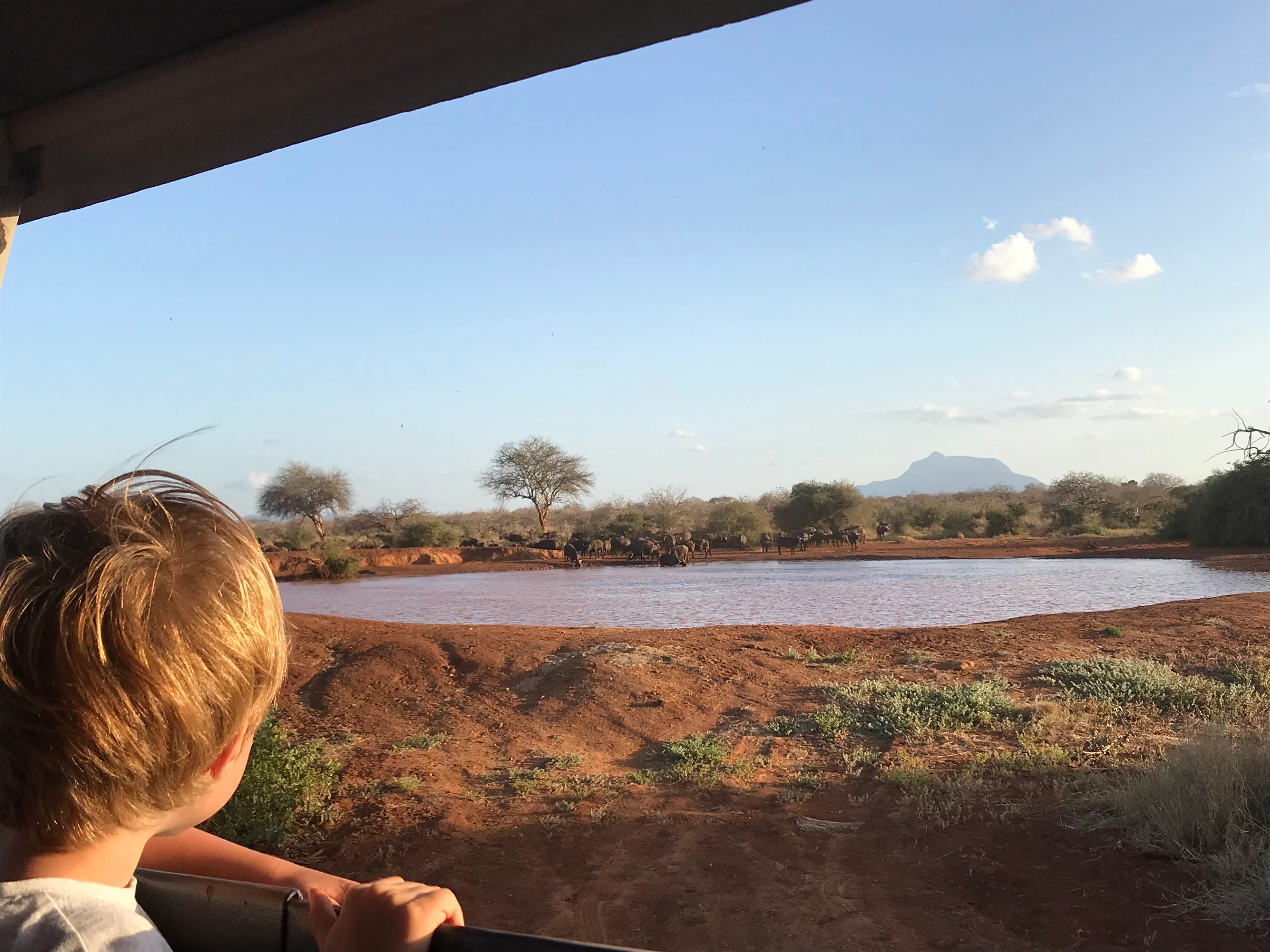 We've Taken Our Kids on Safari and You Can, Too