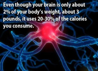 Carbs are fuel for muscles and the brain