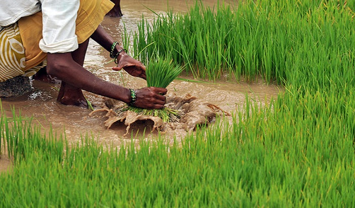 Indian agriculture can be a saviour for corona hit economy, report says. The policy times