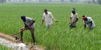 Champaran to Wallmart Journey of Farmer_The Policy Times