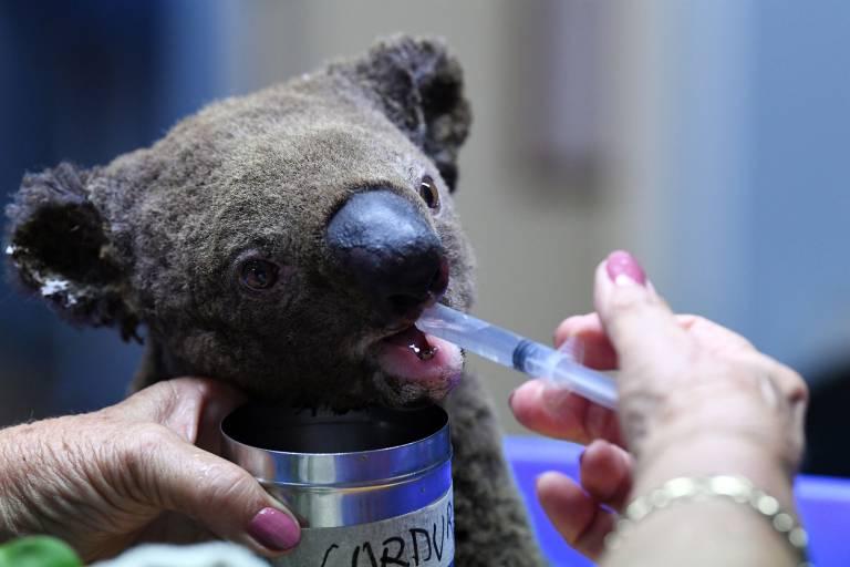 Half a billion animals incinerated in Australia