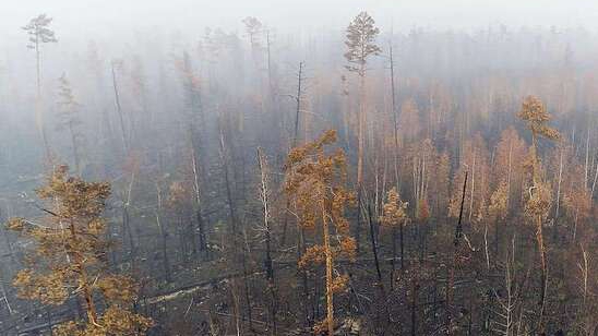 A 'graveyard' for trees in Siberia after a fire event in 2019.