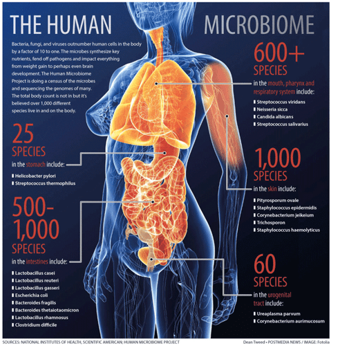 the-microbiome.png