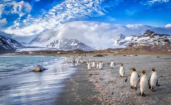 , Antarctica's Larsen C ice shelf is undergoing extensive melting from above; Marine life threatened., The Politicus
