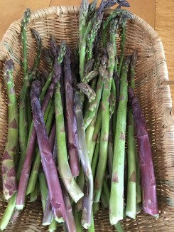 """""""Purple and Green Asparagus"""""""