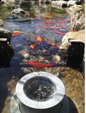Pond Skimmers – The Pond Digger