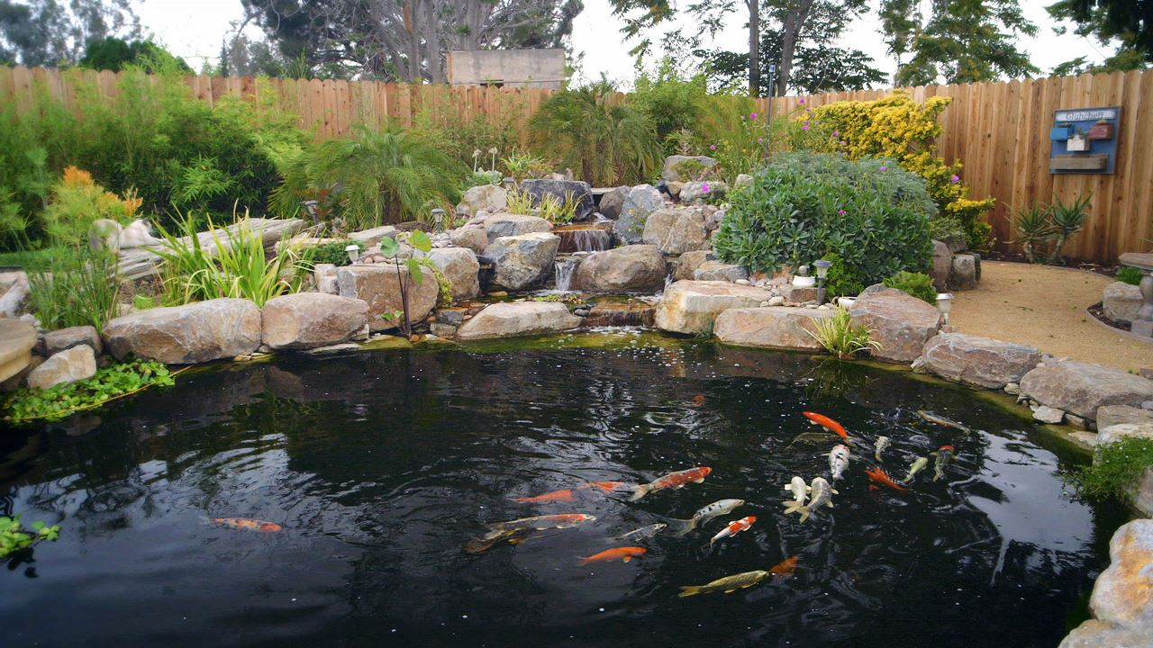 Japanese Koi Pond Design