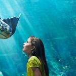 Un Año Lleno de Emoción en SeaWorld y Busch Gardens