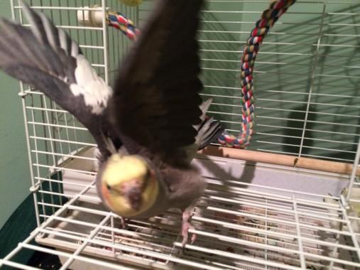My Fair-feather Friend