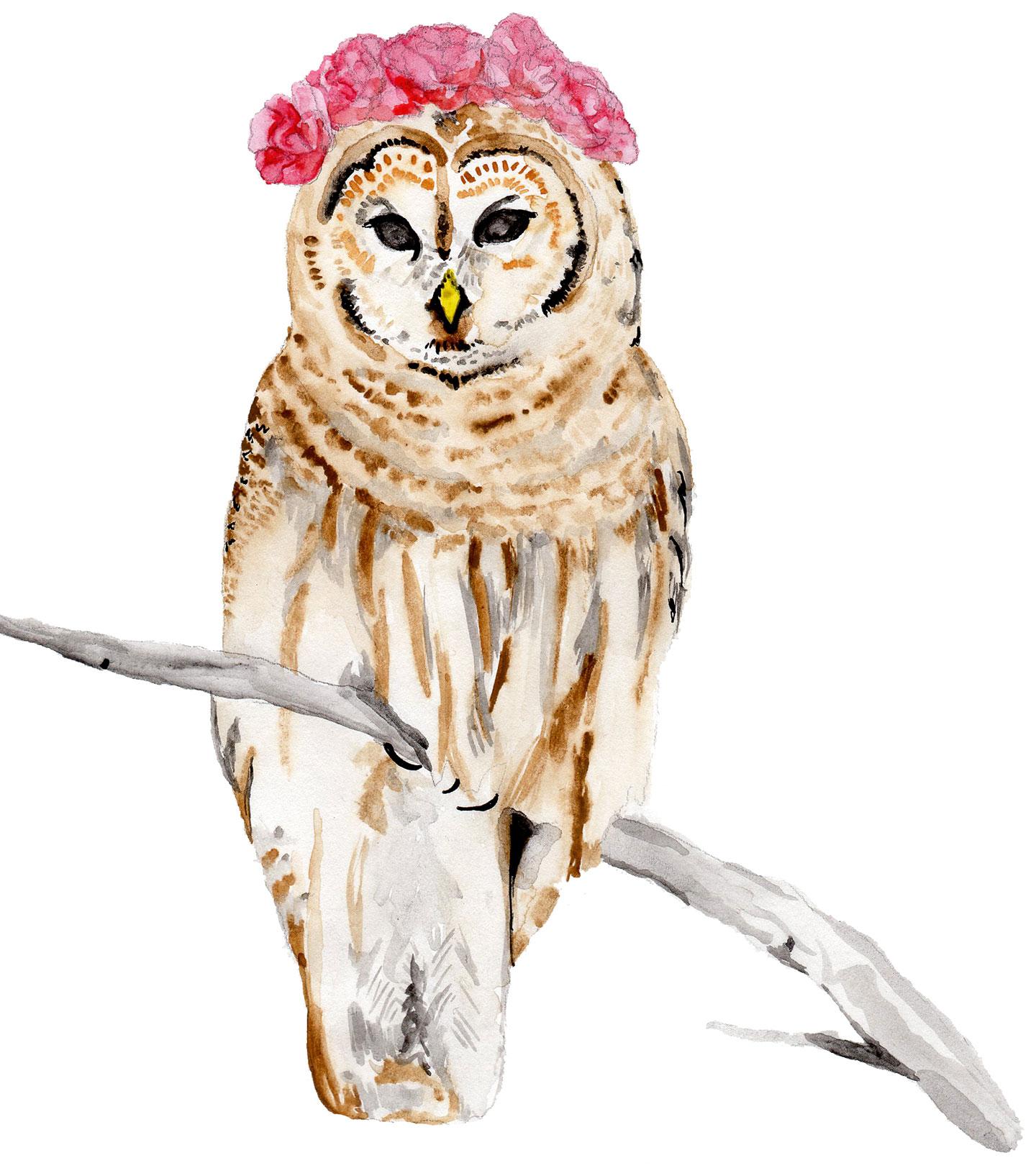 Owl and Peony | The Postman's Knock