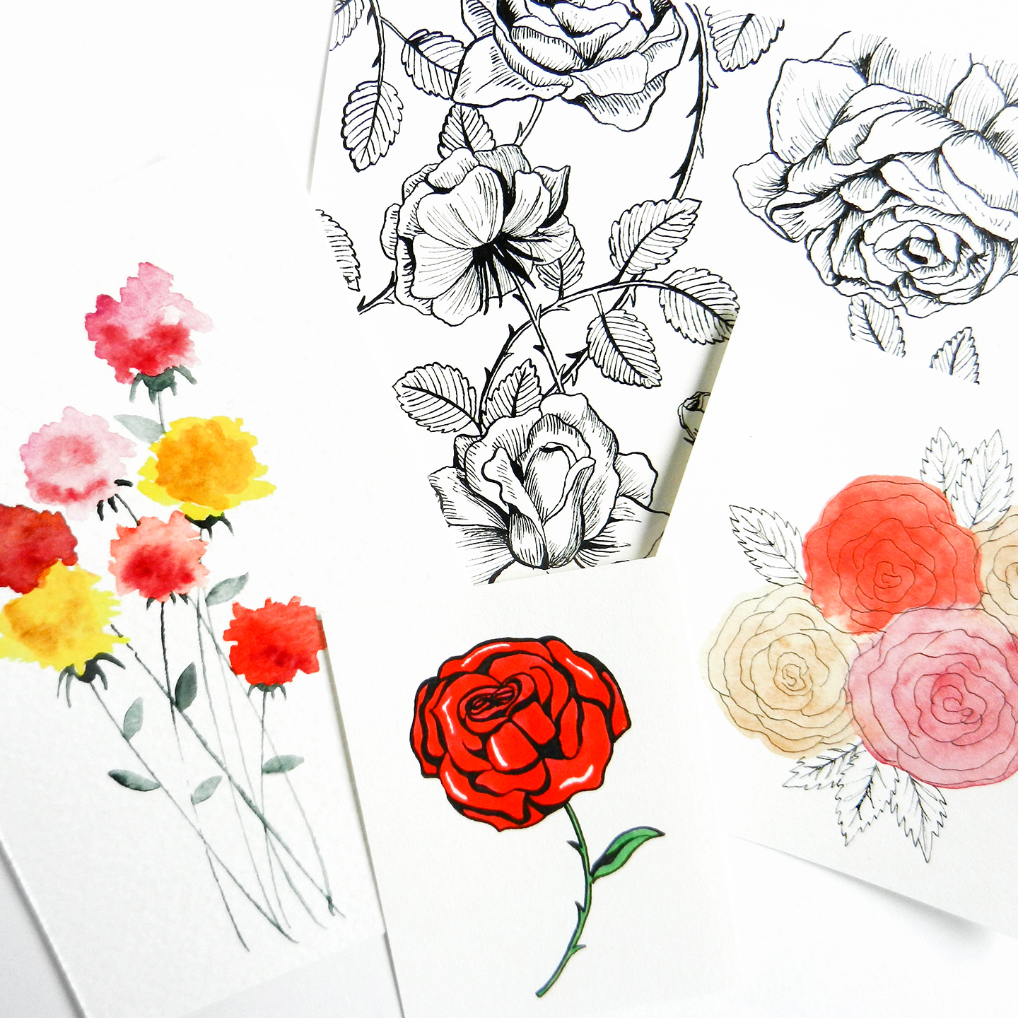 Flower Petals Line Drawing : How to draw roses the postman s knock