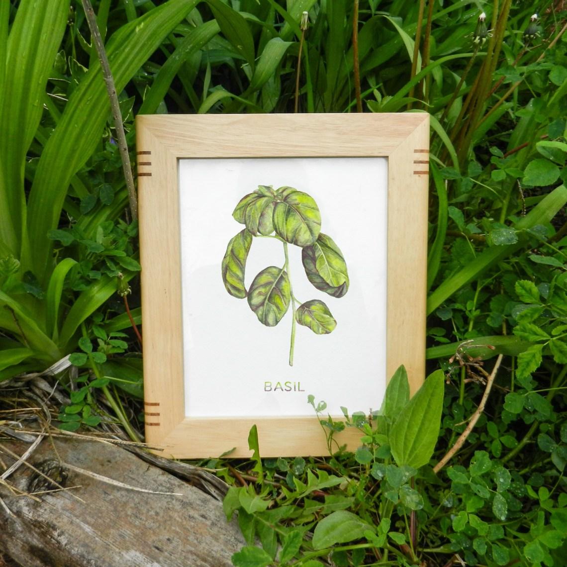 Free Watercolor Basil Art Printable   The Postman's Knock