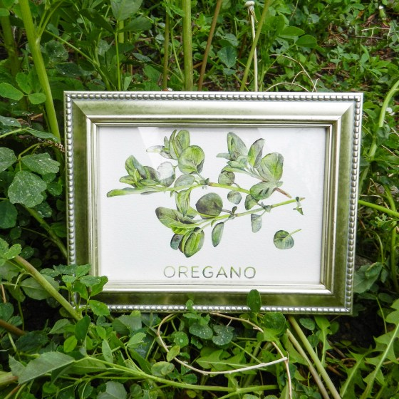 Printable Artwork: Oregano {Watercolor} | The Postman's Knock