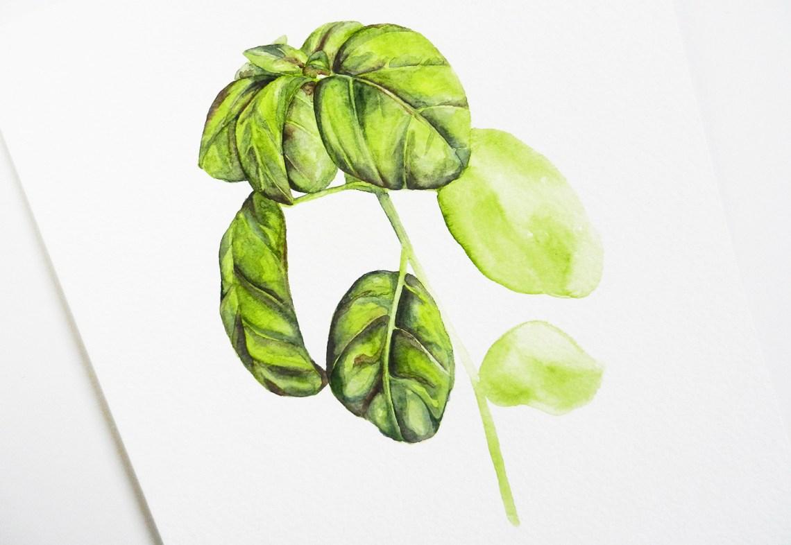 Herbal Watercolor Tutorial + a Free Printable   The Postman's Knock