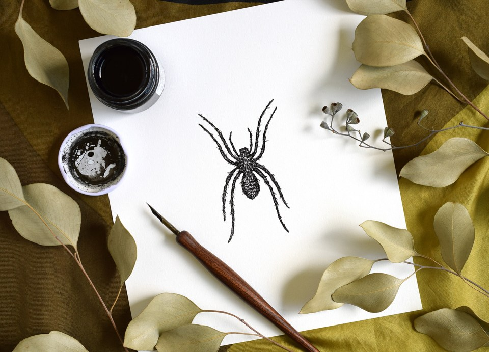 Spider Illustration | The Postman's Knock