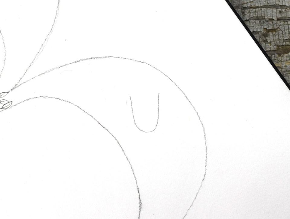 Drawing a daffodil: Step 1