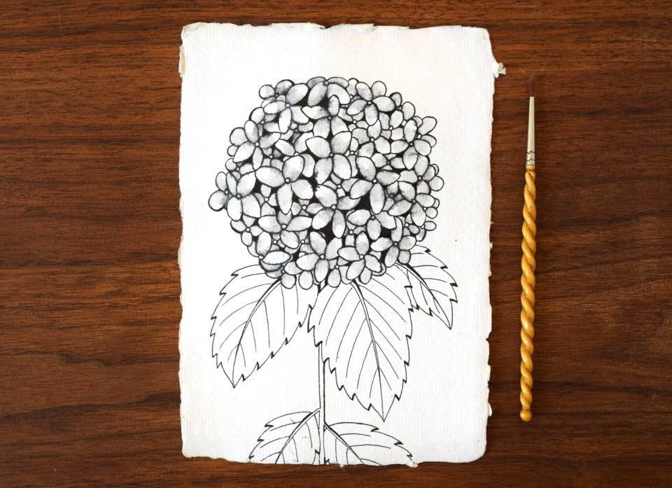 Adding Water to the Hydrangea Illustration
