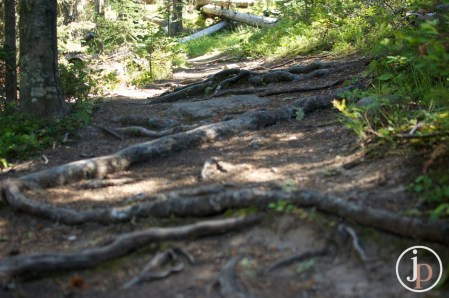 Rooty Path