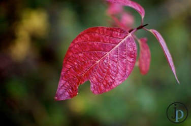 Redness