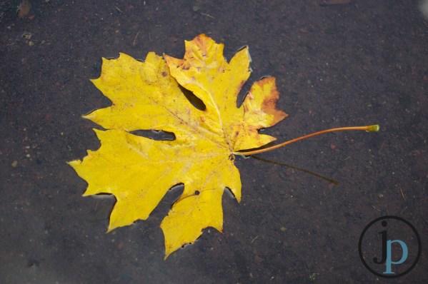 Huge Yellow Leaf