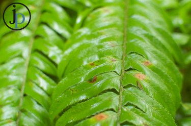 Greenness