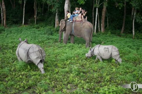 Chitwan (14)