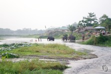 Chitwan (16)
