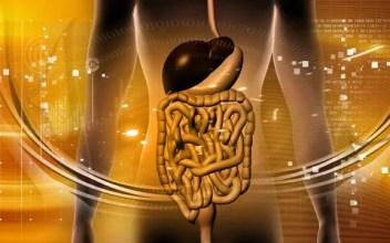 Image result for free fecal transplant image