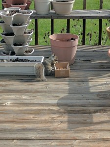 I know this picture has nothing to do with anything in this post. This is a squirrel that hangs out on my parent's deck. He's eating some nuts my mom left out for him. I named him Morton.