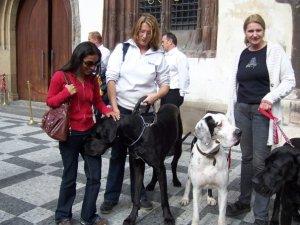 Huge dog in Prague.