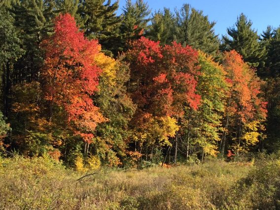 Fall Leaves 2015