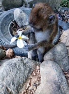 Monkey with flower