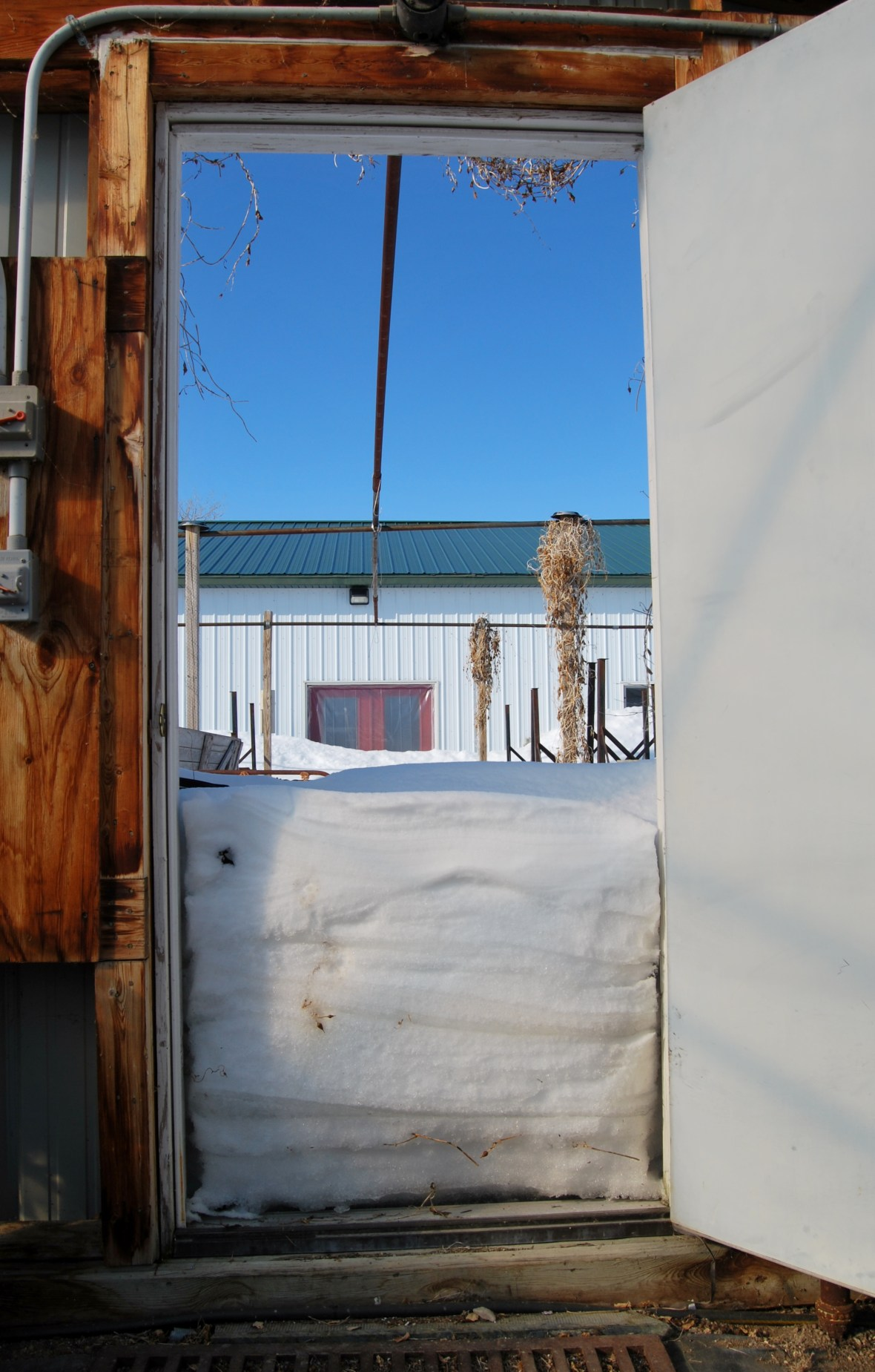 Snow outside coldframe (2)