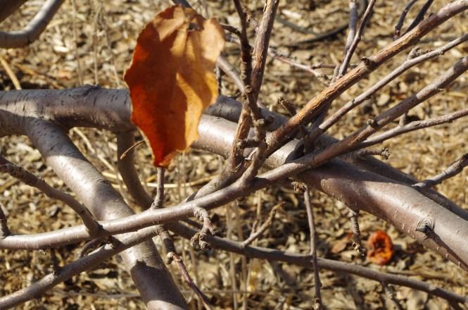 Pruning (2)