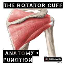 shoulder rotator cuff