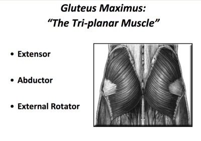 Via Dr. Chris Powers gluteus maximus and medial knee collapse