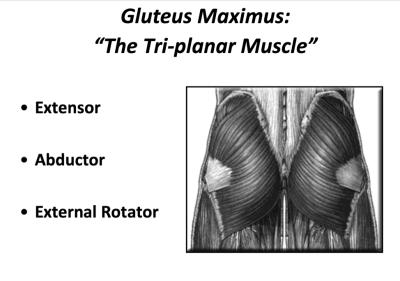 Via Dr. Chris Powers gluteus maximus how to prevent knee valgus
