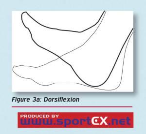 hamstring dorsiflexion proper hamstring stretching