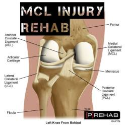 mcl injury rehabilitation