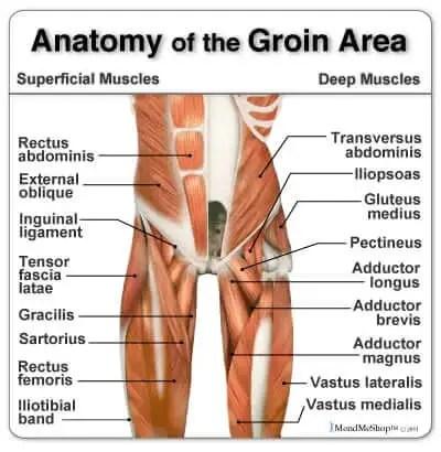anatomy groin pain treatment the prehab guys
