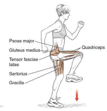hip-flexor stretch muscles